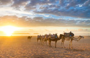 Greener Morocco