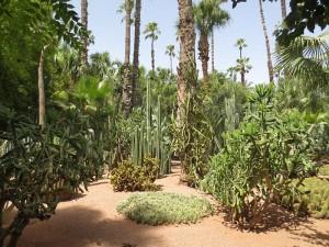 Jardin Majorelle, Marrakech (c) Arnaud 25