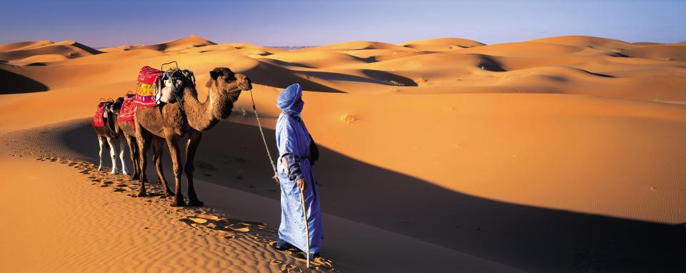 Image result for Everyone loves a Morocco Camel Ride
